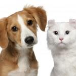 pet dog cat