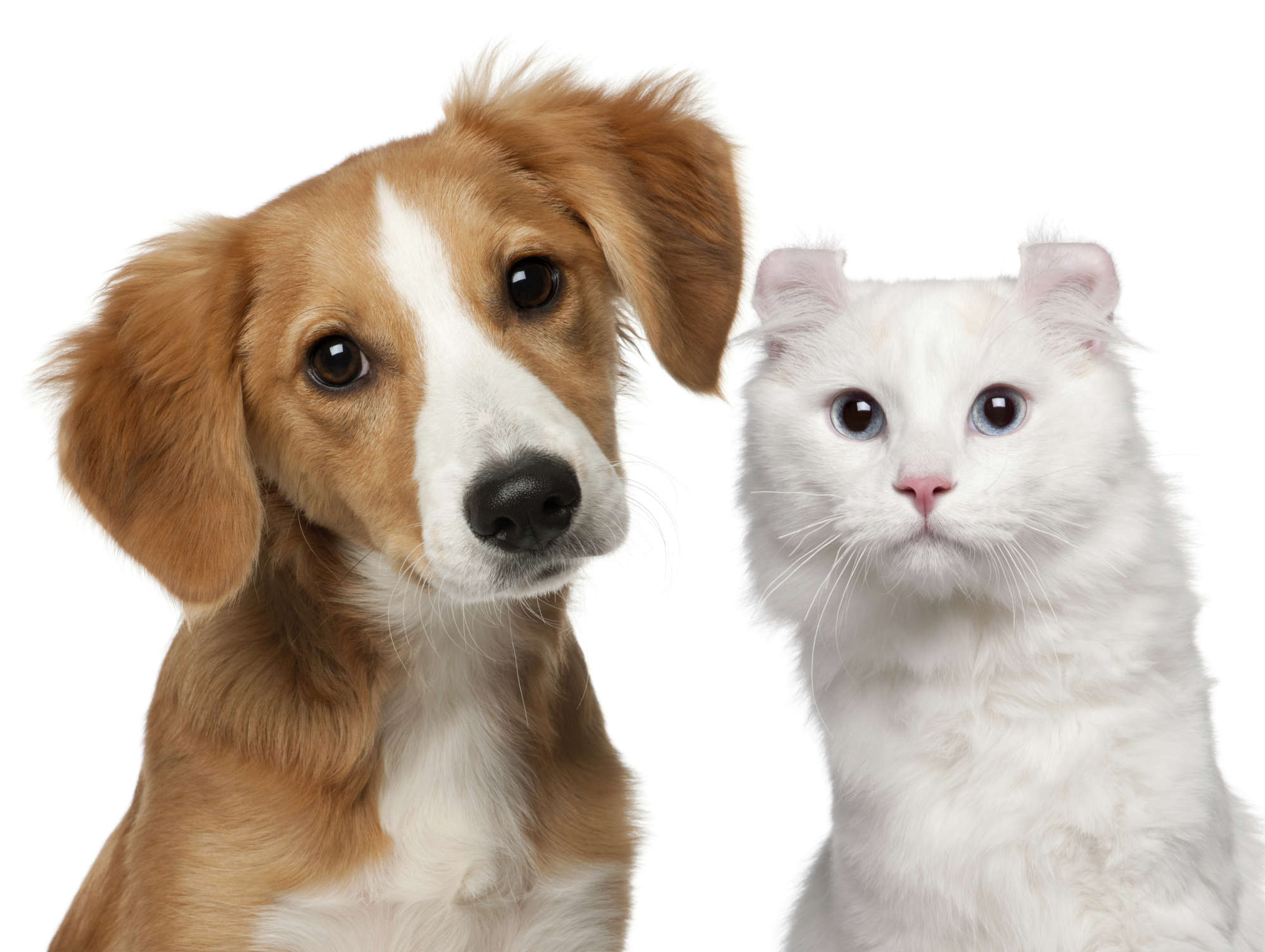 Online Dog And Cat Store
